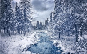 Picture winter, forest, snow, trees, river, Canada, Canada, Quebec, QC