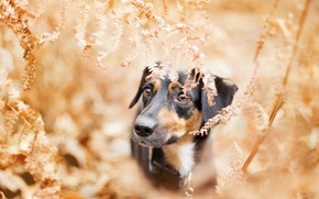 Wallpaper autumn, each, dog