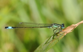Picture sheet, green, dragonfly
