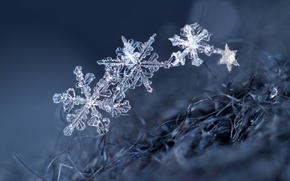 Picture macro, snowflakes, background