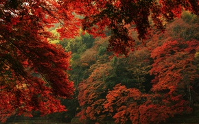 Picture autumn, leaves, trees, nature, view