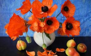 Picture flowers, Maki, petals, vase, fruit, still life, pear