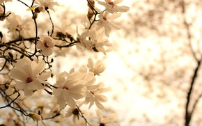 Picture flowers, branch, leaves