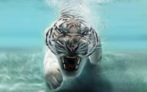Picture face, animal, predator, mouth, fangs, white tiger, in the water