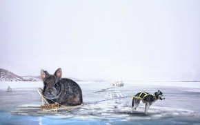 Picture creative, ice, the situation, dog, rabbit, sleigh, husky