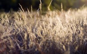 Picture grass, plants