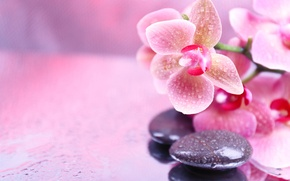 Picture flowers, droplets, Orchid, flowers, Orchid, droplets, Spa stones, Spa stones