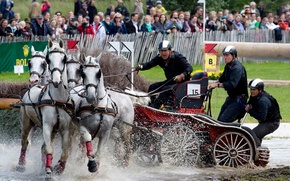 Picture horse riding, competitions of horse sleds, Driving, bushel, Carriage driving