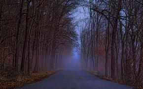 Picture road, forest, landscape