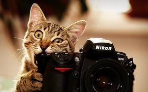 Picture cat, photo, nikon, Kote