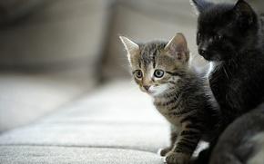 Picture kittens, kids, a couple