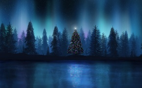 Picture lights, lights, new year, Forest