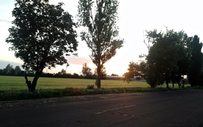 Picture road, greens, trees, nature, Field, Ukraine