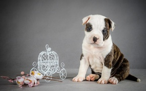 Picture flowers, dog, puppy, coach, puppy, flowers, coach, the dog