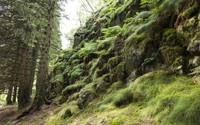 Picture greens, forest, trees, nature, stones