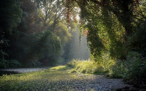 Picture forest, summer, river, morning