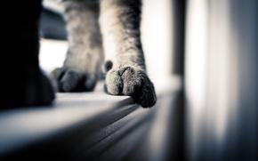 Picture cat, macro, paws