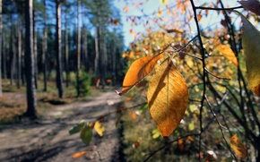 Picture road, autumn, forest, leaves, landscape, real photo