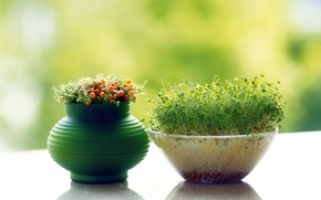 Wallpaper grass, pot, agdi