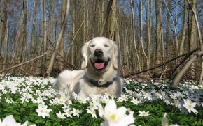 Picture flowers, nature, dog, spring