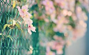 Wallpaper flowers, bokeh, mesh, nature, plant, pink