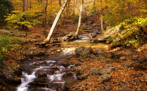 Picture Water, Nature, Trees, Forest, Leaves, Branches, Stream