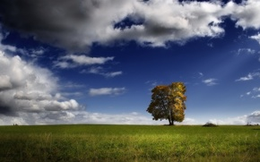 Picture field, clouds, tree