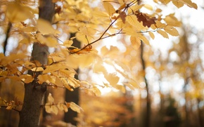 Picture autumn, forest, leaves, macro, trees, yellow, nature, Park