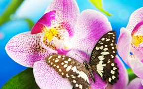 Picture flower, butterfly, Orchid, blossom, butterfly, Orchid