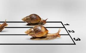 Picture snails, humor, race, the winner, finish