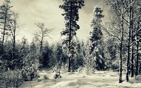 Wallpaper tree, snow, Winter, trees, Winter, forest