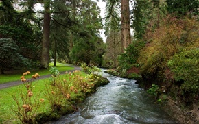 Picture trees, Park, stream, for, UK, path