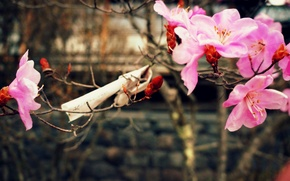 Picture nature, spring, cherry blossoms, a piece of paper with wishes