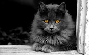 Picture cat, cat, grey, fluffy, window, yellow eyes