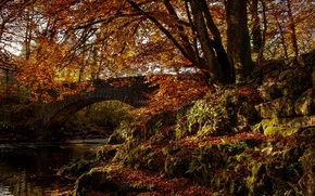 Picture autumn, forest, trees, bridge, Park, river, arch