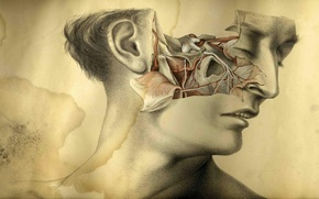 Picture CREATIVE, FIGURE, MUSCLE, FACE, ANATOMY, VESSELS, HEAD