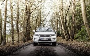 Picture road, forest, Lexus, 2012, Lexus, UK-spec, F-Sport, RX 450h