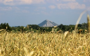 Picture wheat, field, nature, rye, mountain, Russia, Sunny, Sheehan, coat of arms