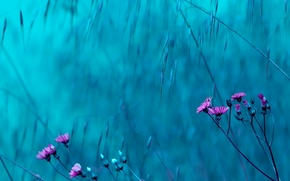 Picture flowers, background, pink, blue, widescreen, Wallpaper, wallpaper, flowers, flowers, widescreen, flowers, background, full screen, HD …