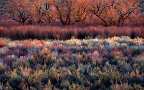 Picture trees, thickets, color, the bushes