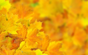 Picture autumn, leaves, macro, bokeh