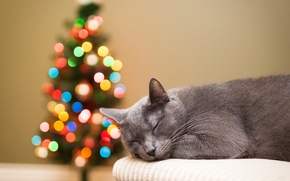 Picture cat, grey, holidays, tree, lights, bokeh, tree, sleeping, cat