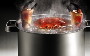 Picture Crab, boiling water, pan