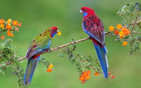 Wallpaper pair, birds, branch, parrot