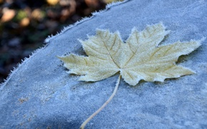 Picture frost, autumn, macro, sheet