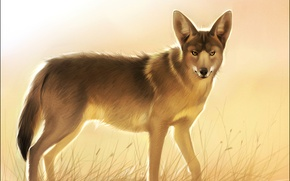 Picture look, face, animal, wolf, fur, art, coyote