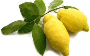 Picture yellow, fruit, citrus, lemons