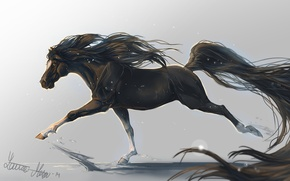 Picture animal, horse, horse, art, mane, tail, hooves