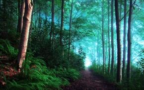 Picture forest, light, fog, England, morning, haze