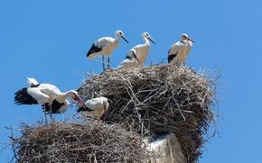 Picture the sky, bird, socket, cranes